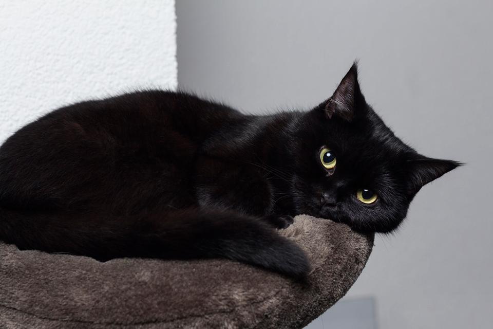 bonito gato preto