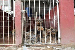 Animais não eram bem alimentados (Foto: Pedro Diogo)