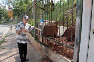 Formigueiro invade casa de moradores (Foto: Pedro Diogo)