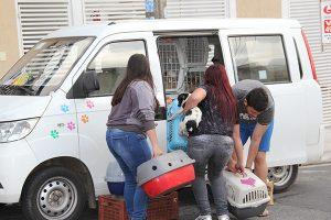 Ongs cuidarão dos animais (Foto: Pedro Diogo)